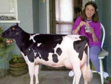 Miniature Milk Producers