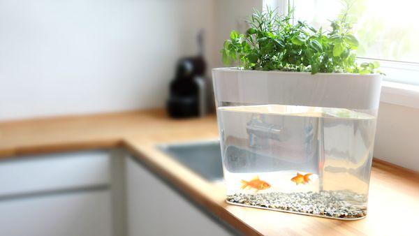 Self Watering Herb Kits mini herb garden