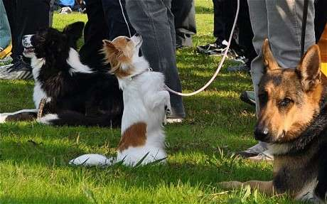 Unusual Canine Cops