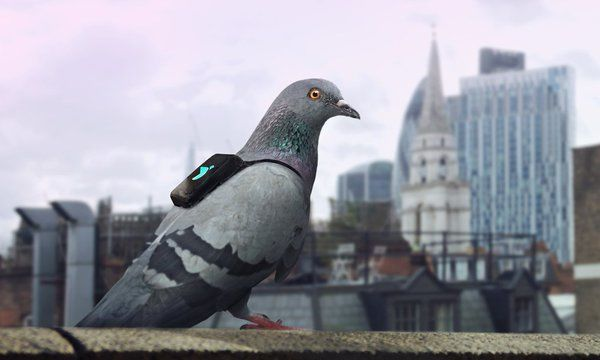 Pigeon Pollution Campaigns
