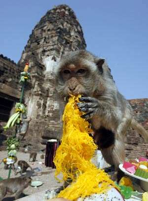 Thai Thanksgiving for Primates