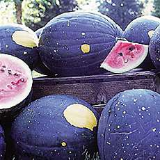 Moon and Star Watermellon