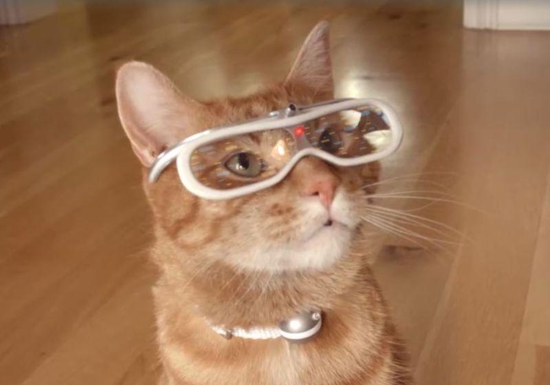 Interactive Cat Videos