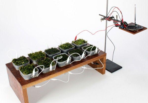Fungus-Fueled Radios