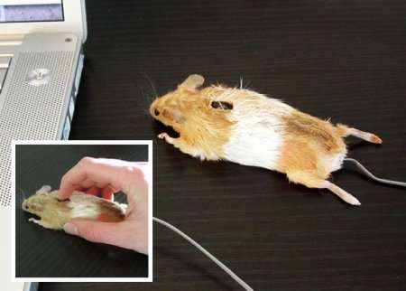 Tech-Savvy Taxidermy