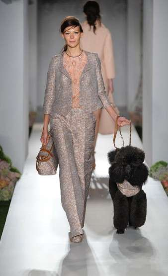 Literal Runway Puppy Love