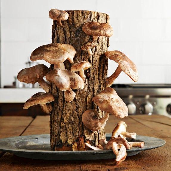 Mushroom Harvesting Logs
