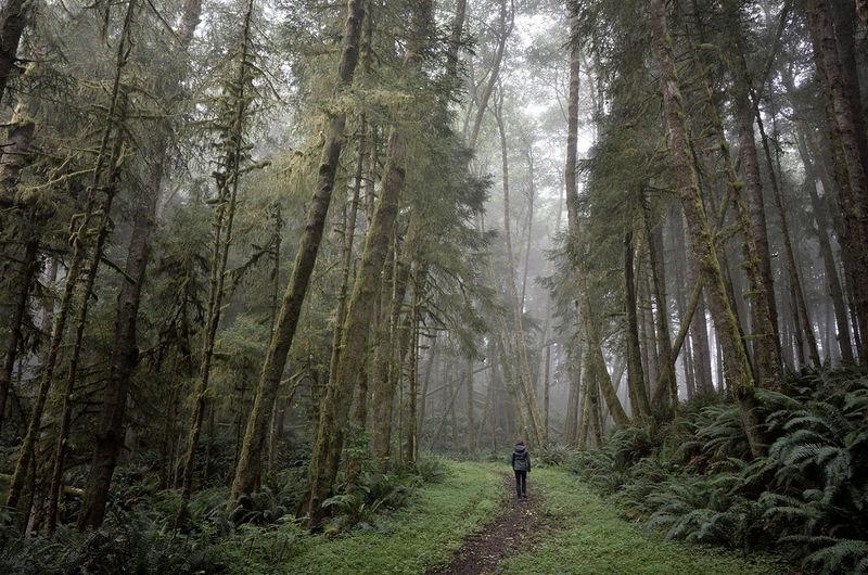 Mysterious Landscape Photography