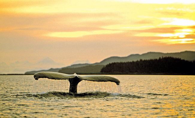 Alaskan Wildlife Expeditions
