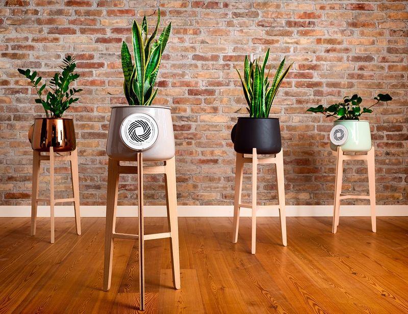 Natural Plant Air Purifiers