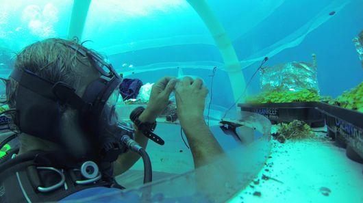 Underwater Gardening Projects