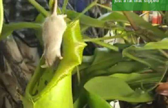 Meat-Eating Plants