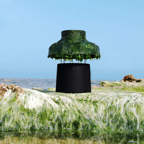 Seaweed Accentuated Lamps