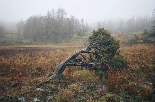 Haunting Nature Photography