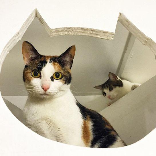 Metropolitan Cat Cafes