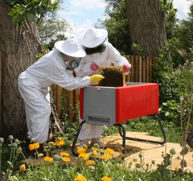 DIY Apiaries