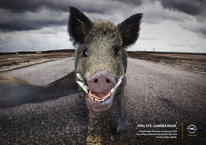 Animal Selfie Ads