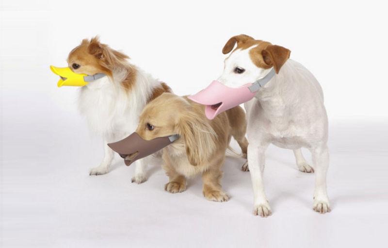 Ducky Dog-Wearing Beaks