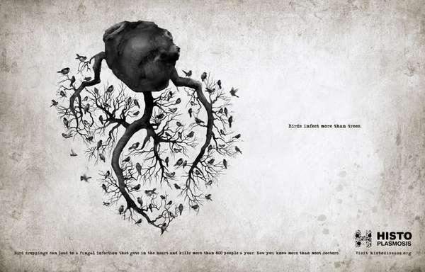 Bird-Infested Organ Ads