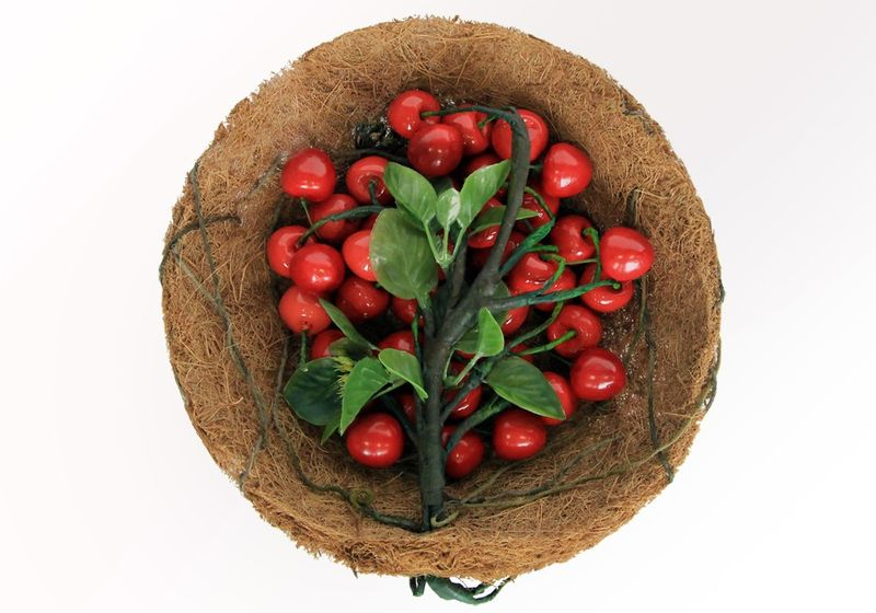 Organic Fruit Packaging