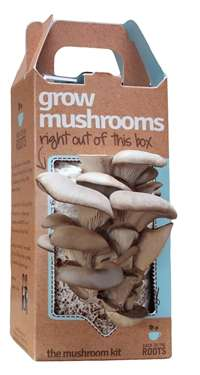 Oyster Mushroom Growing Kits
