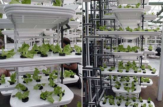 Vertical Farms for Animals