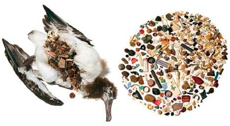 Eco-Negligence Kills Albatross