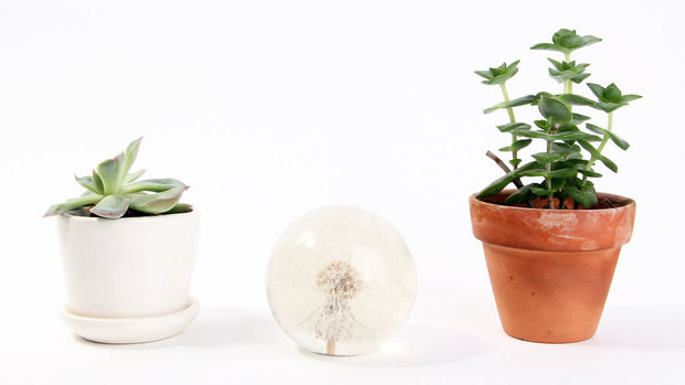 Ethereal Floral Paperweights