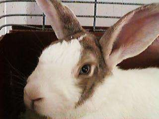 Parents Discouraged from Buying Live Easter Bunnies
