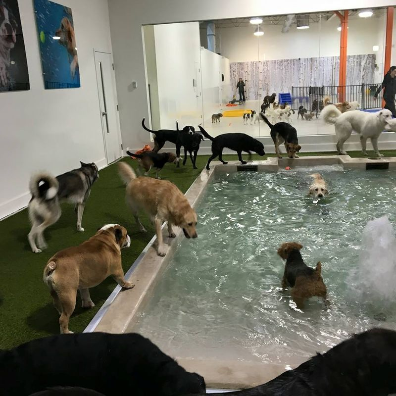 Urban Dog Resorts
