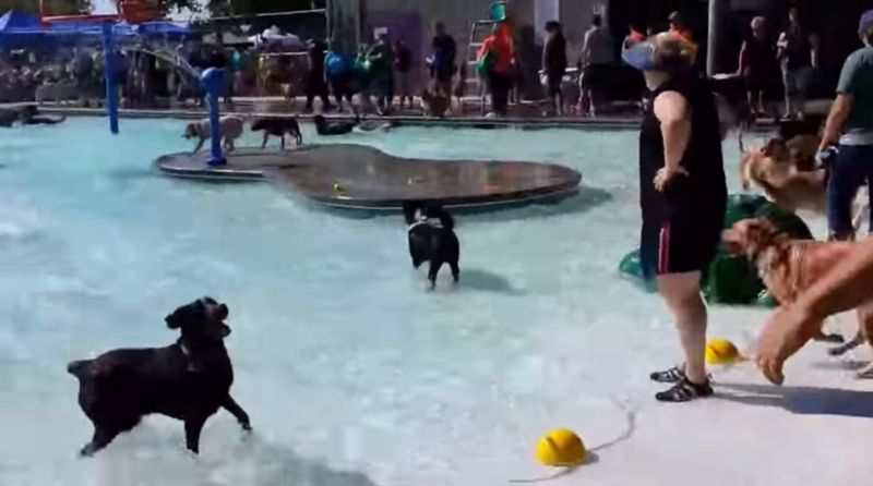 Pooch Pool Parties Party For Dogs