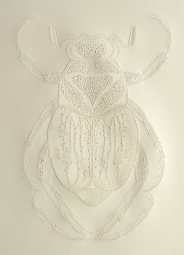 Etched Insect Artworks