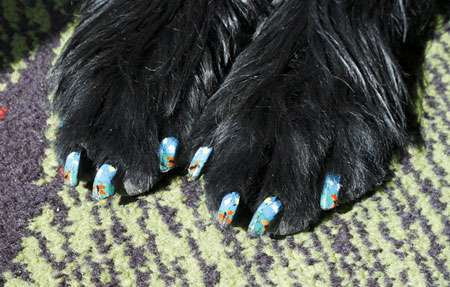 DIY Canine Manicures