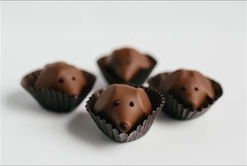 Delicious Dog Chocolates