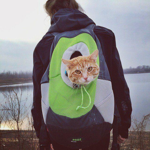 Portable Pet Backpacks
