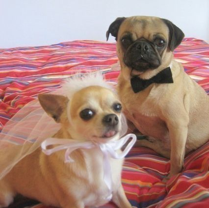 Canine Nuptial Costumes