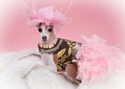 pet fashion couture