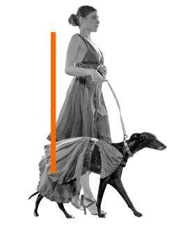 Pet Fashion Week Hits New York