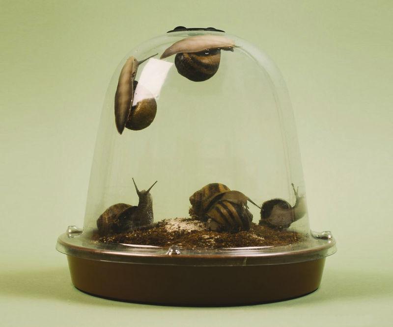 Home-Grown Escargot Kits