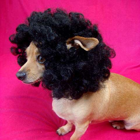 Afro Pet Wigs