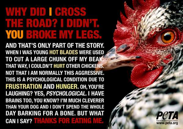 Disturbing Chicken Interviews