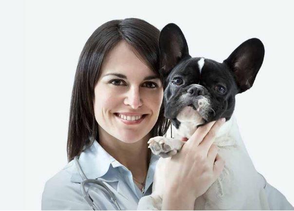 On-Demand Pet Health Services