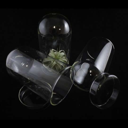 Glass Plant Pods