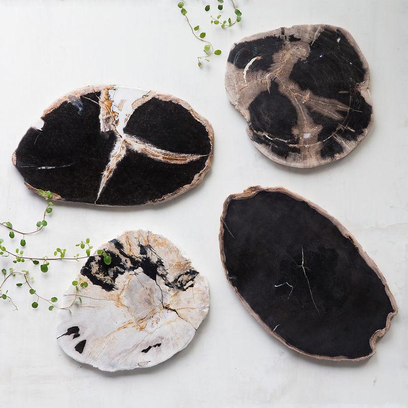 Fossilized Wood Decor