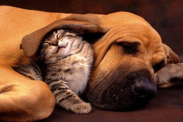 Alternative At-Home Animal Accomodations