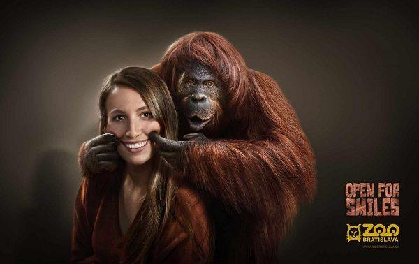 Photobombing Animals Ads