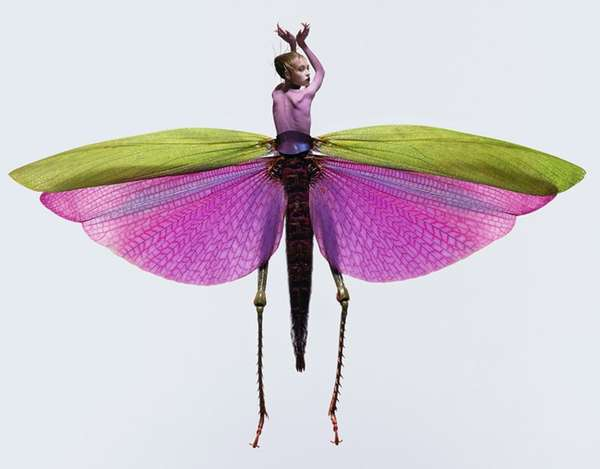 Personified Insect Photography