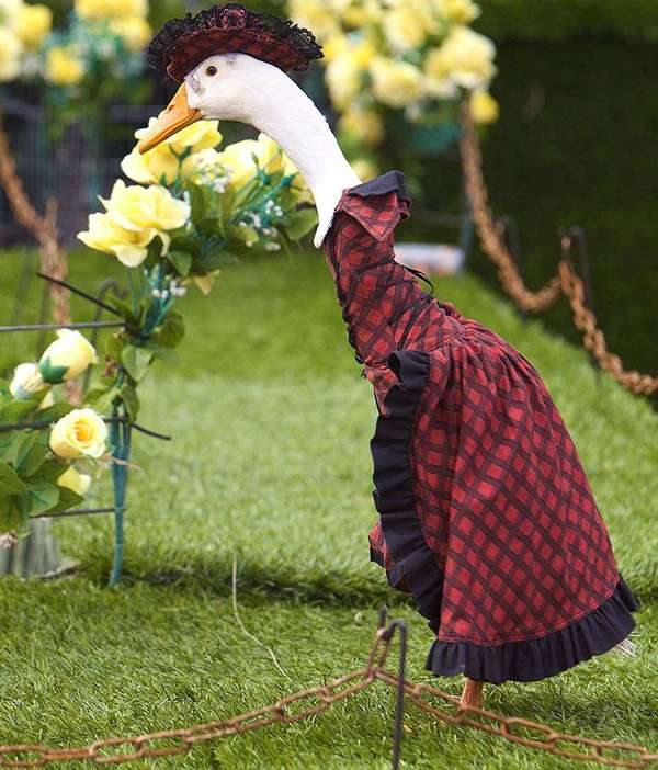Quirky Duck Fashion Shows Update Pied Piper Duck
