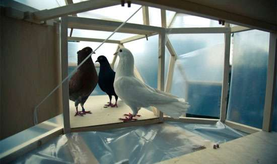 Bird Poop Soap