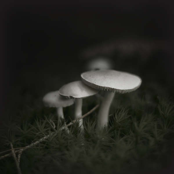 Mysterious Mushroom Photography Pilz By Jurgen Heckel
